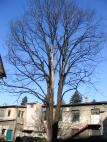 Strom na nádvoří firmy