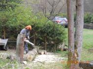 Dělení pořezaného stromu na zemi